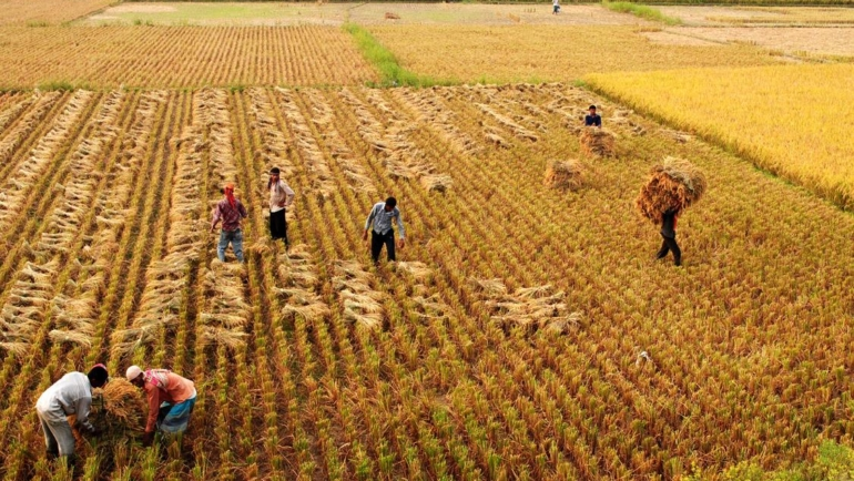 Innovative ways to reduce risks in farming by advancing land ownership